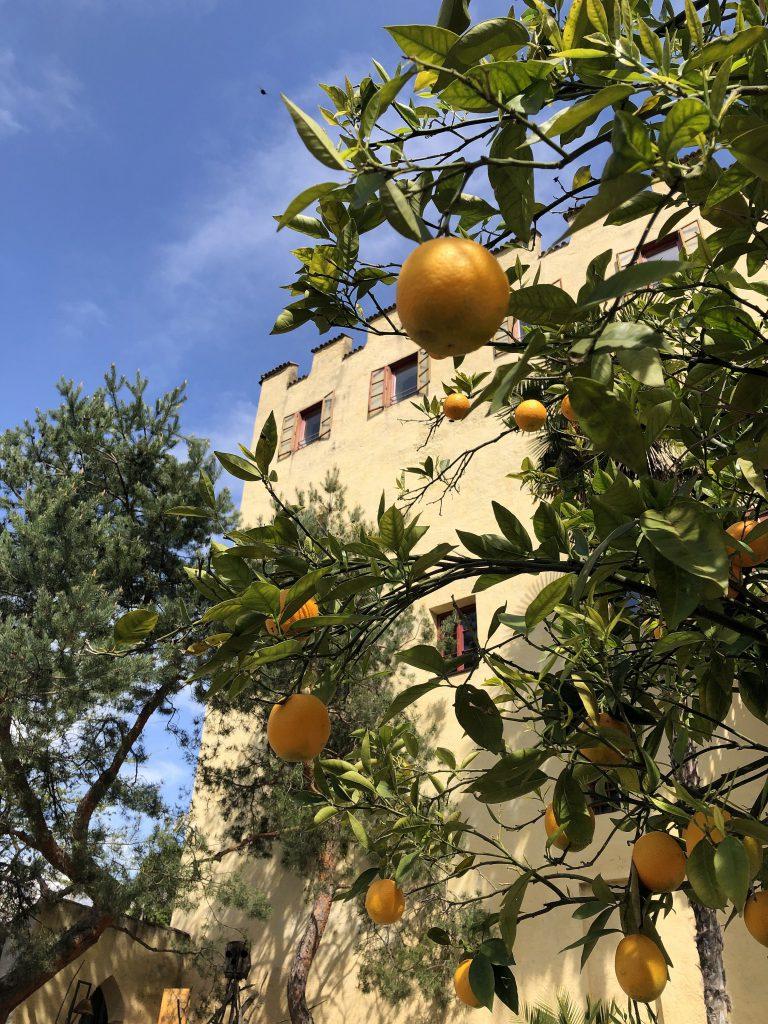 Schloss_Trauttmansdorff_Zitronen
